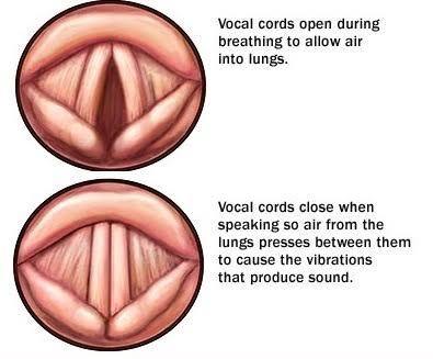 صدای سینه ( Chest Voice ) چیست؟